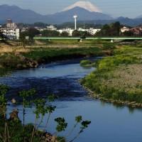 4月20日 久し振りの浅川散策-富士山とカワセミ
