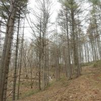 NK一族「森林」