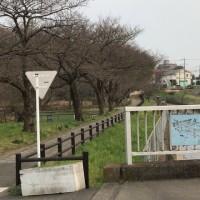 東浦和周辺桜の開花情報VoL1