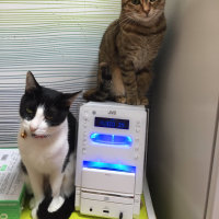 ネコカフェ「きぶん屋」さん 海ちゃんと子ネコのママちゃん
