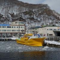 北海道 知床羅臼流氷船からオオワシを!(10)