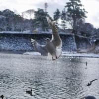 雪の日の鳥たち