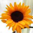 向日葵の花の季節♪