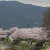 2017. 桜