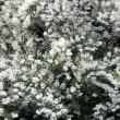 久しぶりのウオーキングは花を楽しみながら