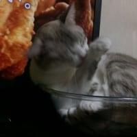 猫とあかりの日