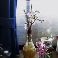 春の木の花&シニアって哀しいな。。。