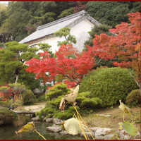 今年の長府庭園の紅葉