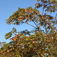 10月25日、午前6時~8時過ぎの空模様