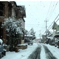 1/23(月)大雪と、ぬくぬくネンネのお2人さん