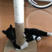 毎日猫たまに動物園(多摩だけにね・・・くくく)