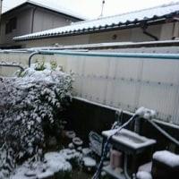 雪でしたよ!