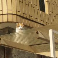 2月3月のお休み予定 とお猫。