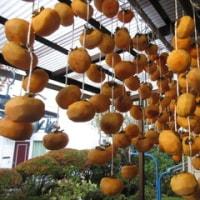 10月27日(木)柿簾