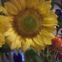 シャンソン歌手リリ・レイLILI LEY  シャンソン部屋のそれぞれの花の個性と美