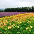 北海道〜最終日 富良野とジンギスカン