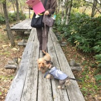2016年ワンコの親戚さんと秋の旅行会  その2