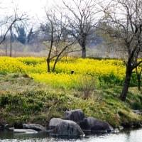 春! 黄色の花