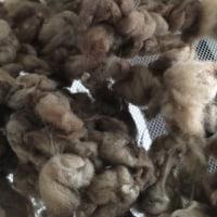 染めた道産羊毛2色。