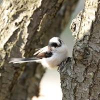 梅林の鳥たち