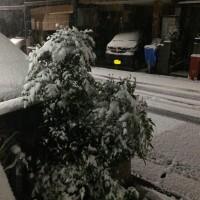 雪だ!!2