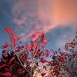 Autumn Twilight (10-25-16)