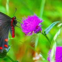 比企の里・・・嵐山町・・・菅谷館跡・蝶の里公園・・・ジャコウアゲハに逢いたくて徘徊