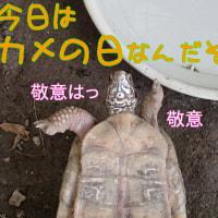 Shellebrate World Turtle Day !