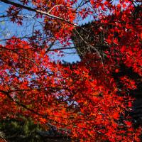 清水寺の紅葉 鮮やかさを撮る
