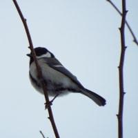 ほっと一息~メタボな野鳥