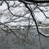 川端通から鴨川を。。