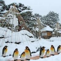 雪景色にペンギン・・・