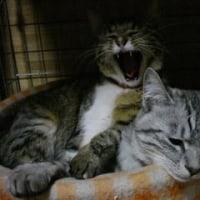 休憩タイム我が家の猫達