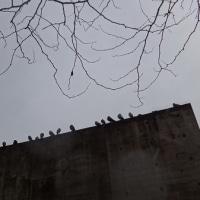 鳩に愛される、鳩のたまり場・・・安藤忠雄作、評判の悪い「壁」