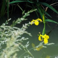 汚れた川に咲く花の哀れ!