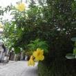2017年沖縄(6)