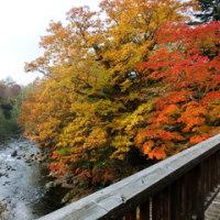 秋の紅葉は素晴らしい!