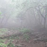 丹沢:塔ノ岳;山ヒルにご用心