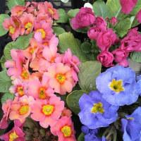 春待ち顔の植物たち‥─‥(o^^o)/