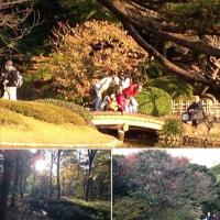 公共東御苑の一つの景観のすばらしさです。 2014年11月28日
