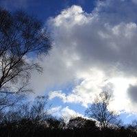 写真訳詩:森の星霜×Shakespeare