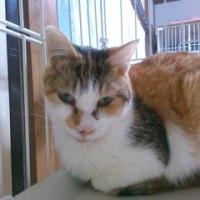 多頭飼育崩壊の猫達・我が家の預かり猫