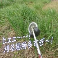 母の日&父の日兼用・・・物より行動プレゼント・・(草刈りプレゼント編)&山の恵み山菜そば~