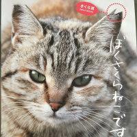 人と生きる猫の勲章☆さくら猫