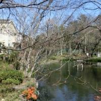 つりがね池公園 開花