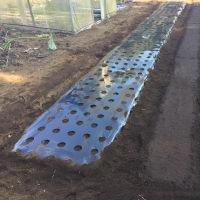 玉ねぎの圃場を整備する