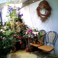 五月の渋谷区ふれあい植物センター