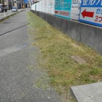 店へと続く、国道の歩道脇・・・雑草を刈りました。お客様に気持ちよくご来店いただくためにも・・・