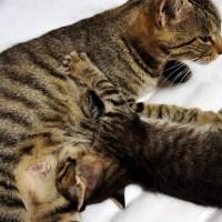 我が家のニャン歴史 ~メス猫が飼いたいのに~④