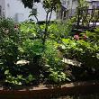雑多な花壇